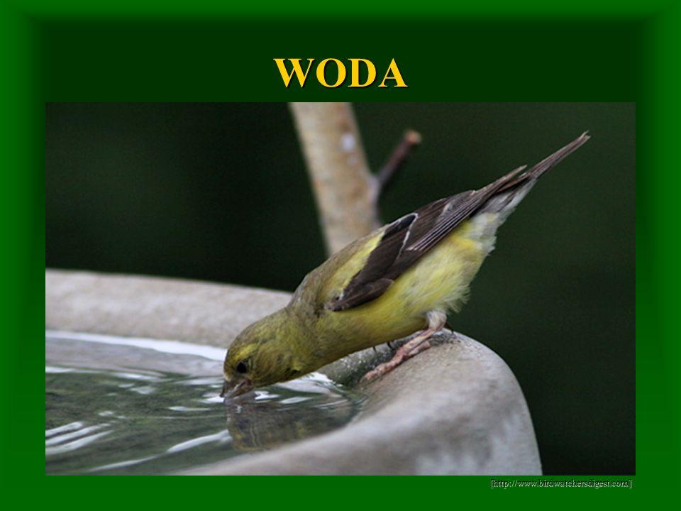 WODA [http://www.birdwatchersdigest.com]